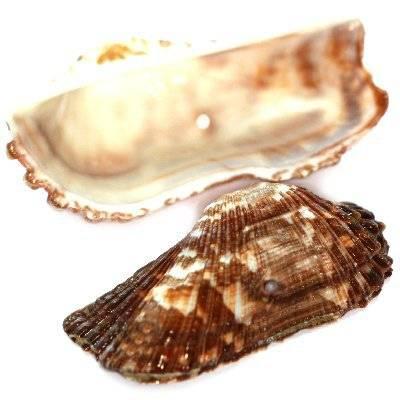 muszle podłużne 3-6 cm