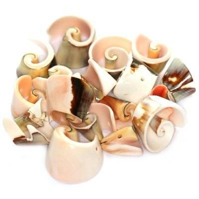coquilles spirales coupées 1.5-2.5 cm