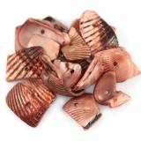 shells flakes stripes cut nut-brown 0.9-1.5 cm