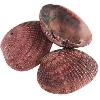 mušle  mocca 2,5-4 cm
