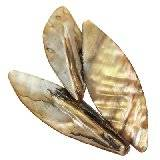 mother of pearl arrows gold 3.5-5 cm