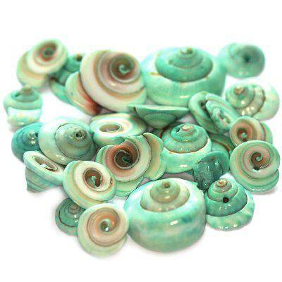 shells curly cut green 1-2 cm