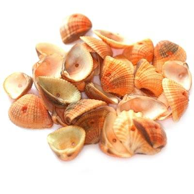 muszelki morelowe 1.5-2 cm