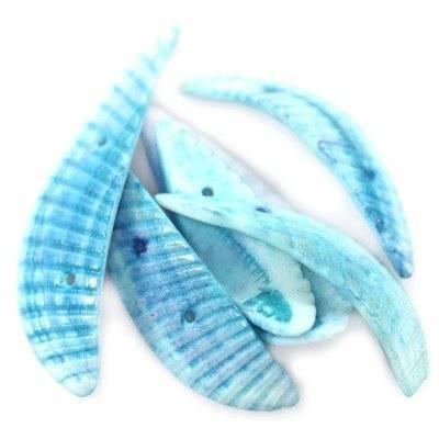 coquilles ailes coupées bleues 2.5-5 cm